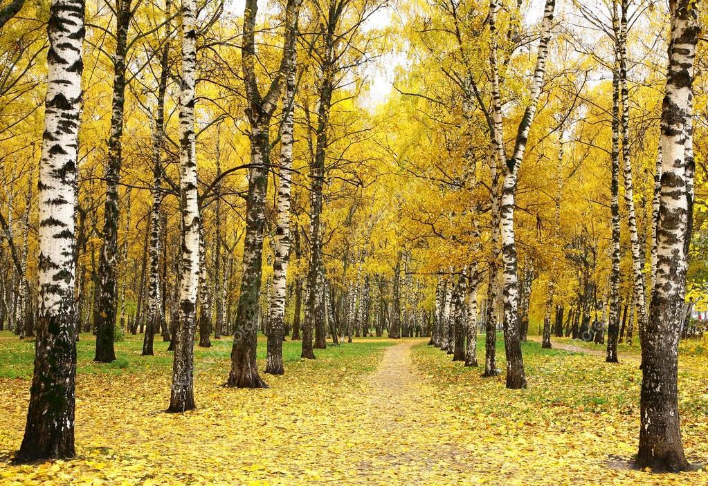 Золотая осень в городском парке — Стоковое фото ...