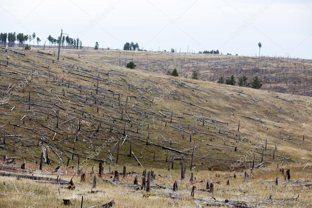 Decimated deforested hillside slopes