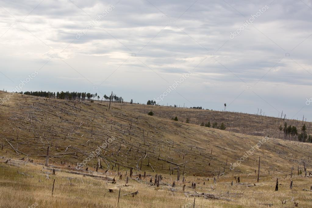 Deforested hillside with remnants of felled trees