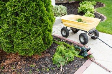Garden tools used to trim arborvitaes