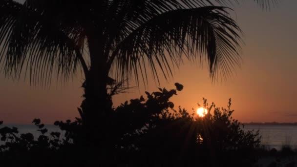 Pálmafák naplementekor