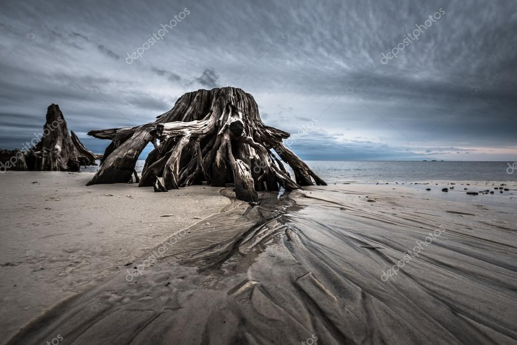 Sand Waves Dramatic Clouds Cypress Tree roots Carabelle Beach Fl