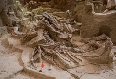 Mammoth Site Close-up
