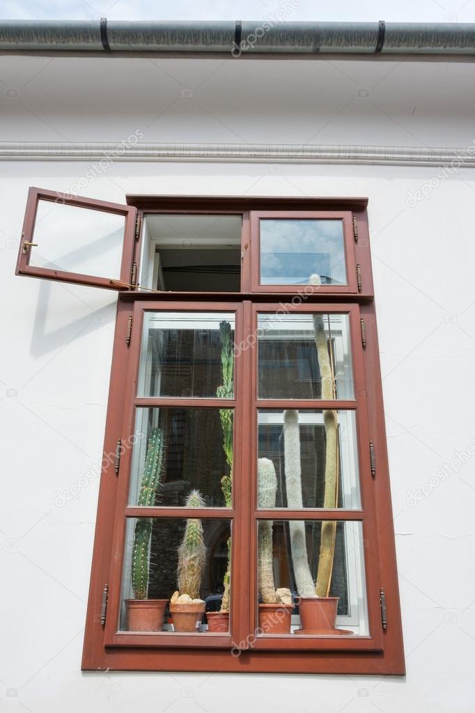 Orchideas en pantalla en una ventana con marco de madera peelng ...