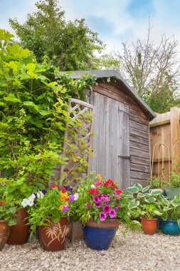 Garden shed hidden by colorful containers of flowers