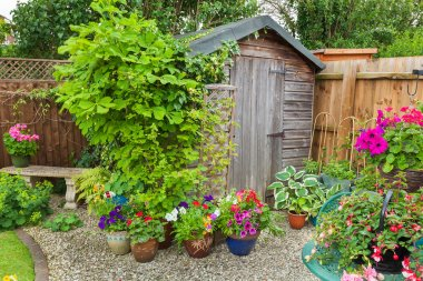 Garden shed hidden by plants and trees.