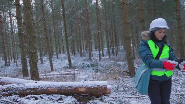 Woman forest scientist inspects coniferous felling area