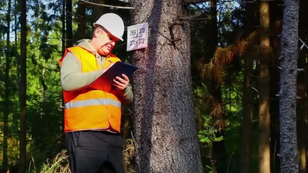 Boscaiolo scrittura vicino allalbero contrassegnato nella foresta