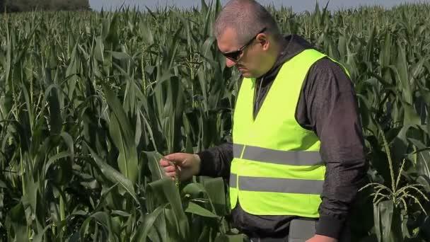 Farmář na kukuřičném poli