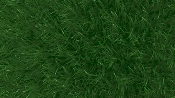 Gras wiegt sich im Wind