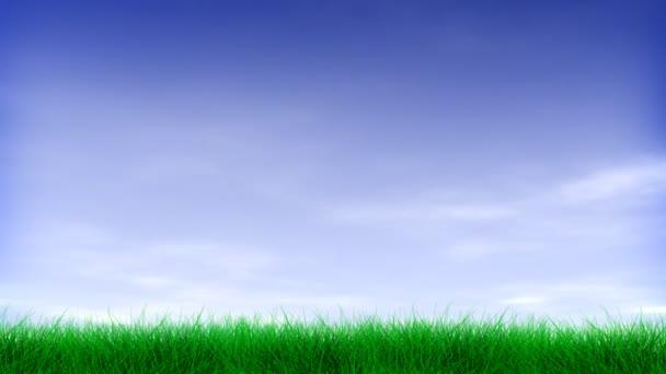 grünes Gras  blauer Himmel