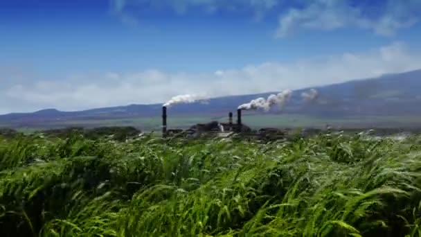 Sugarcane Field and Refinery (Hawaii)