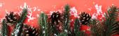 Šišky borovice s jedlovými větvemi a umělým sněhem, novoroční koncept, prapor
