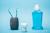 Model of tooth near toothbrushes and mouthwash on blurred background on blue background