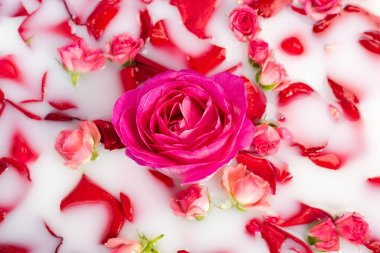 Top view of pink flower near roses in milky water stock vector