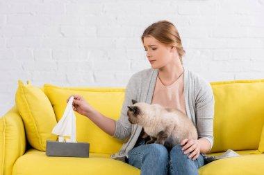 Siyam kedisinin yanında alerji sırasında peçete alan üzgün kadın.