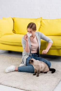 Woman with napkin sneezing during allergy near furry siamese cat on carpet stock vector