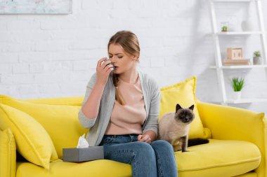 Kanepede kürklü siyam kedisinin yanında astım spreyi kullanan alerjisi olan bir kadın.