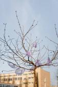 celofánové sáčky na stromě ve městě proti modré obloze, koncept ekologie