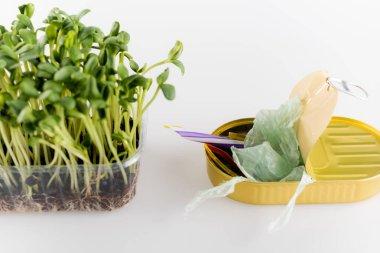 Beyaz, ekoloji kavramı üzerine plastik kabın içinde büyüyen genç bitkilerin yanındaki çöplerle dolu teneke kutu.