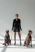 Dobermann Hunde in der Nähe einer selbstbewussten Frau im schwarzen Blazerkleid auf grauem Hintergrund mit Schatten