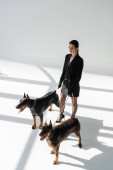 high angle view of trendy woman with doberman dogs on chain leashes on grey background with shadows