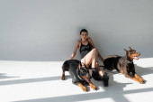 young woman in black bodysuit sitting near doberman dogs on grey background with shadows