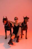 doberman kutyák közelében szexi nő ül fegyvert rózsaszín háttér sárga fény
