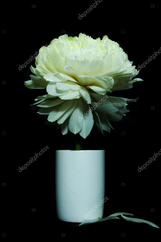 Green Lotus Flower Magnolia Lotus Album Plenum Stock Photo