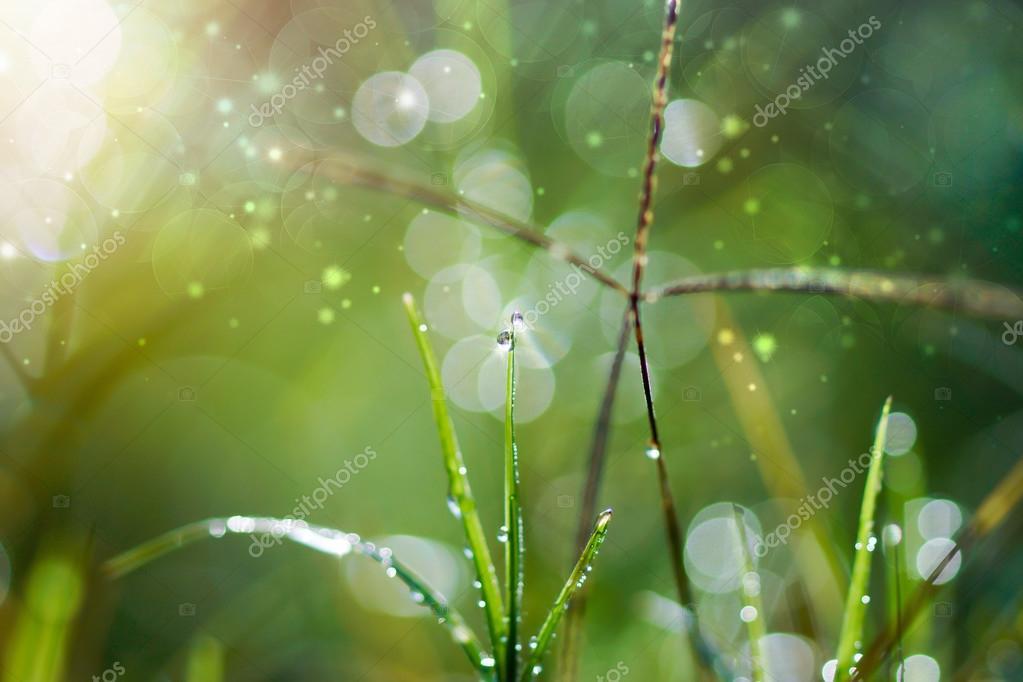 Fresh morning dew on spring grass, natural green light backgroun