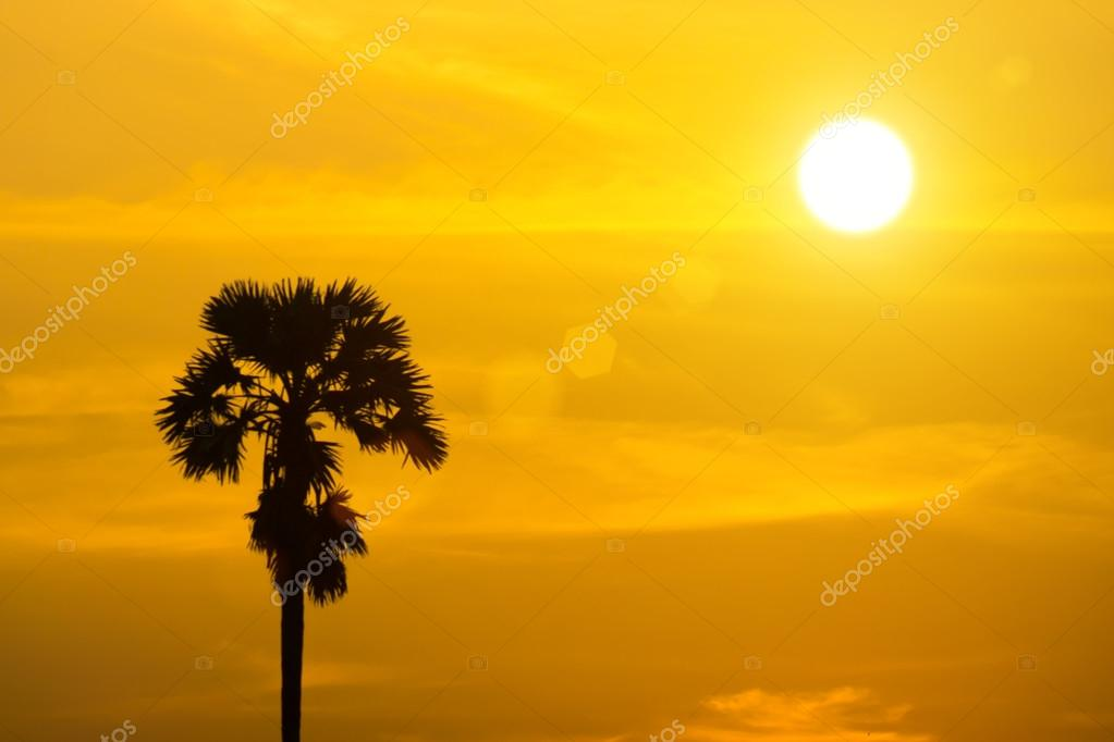 Sugar palm trees with sunset.