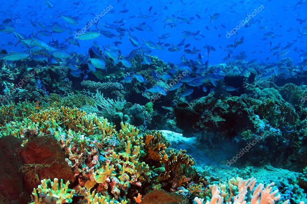 Coral Reef Komodo