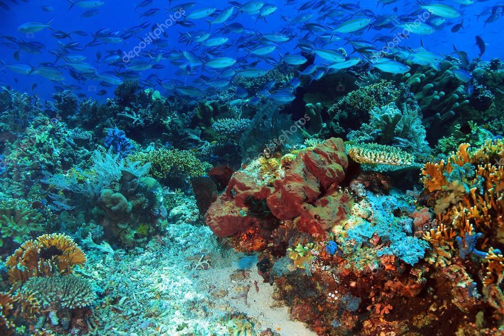 Komodo Coral Reef