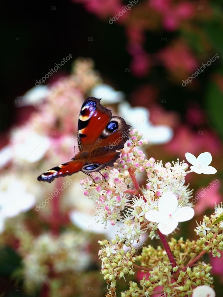 Plants, Nature, flowers