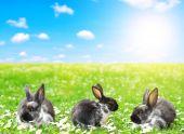 Fotografia carino piccolo coniglietto di Pasqua nel prato