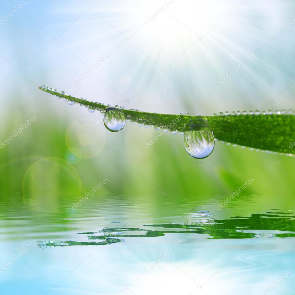 Fresh grass with dew drops closeup.