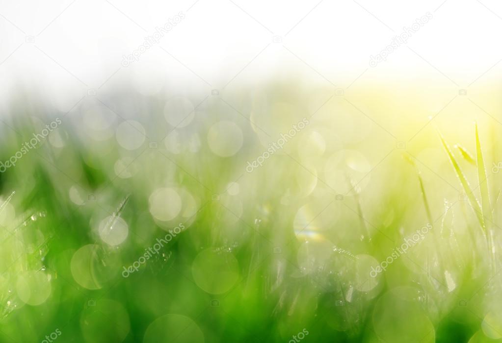 Fresh spring bokeh in green grass.