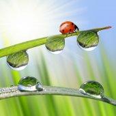 Photo Fresh morning dew and ladybird