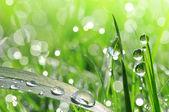 Fotografie Čerstvé zelené trávě s detailním kapka Rosy