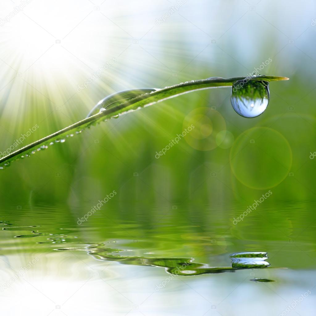 Fresh green grass with dew drop