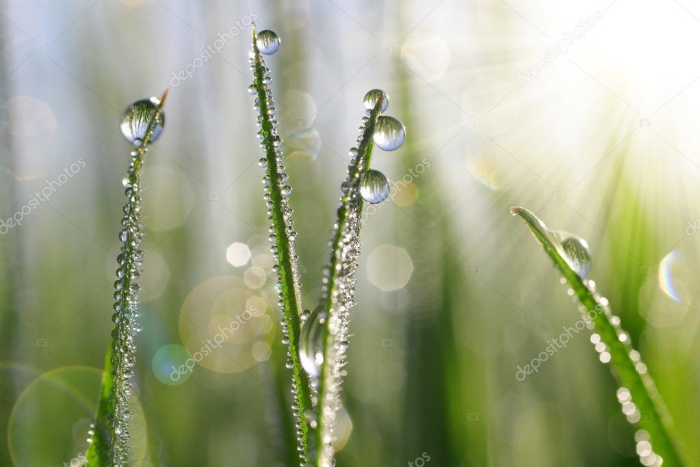 Fresh green grass with water drops closeup.