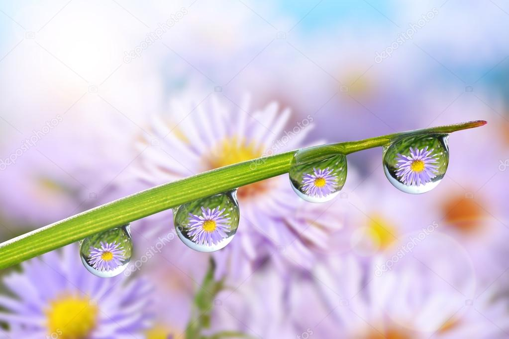 Flowers in the drops of dew on the green grass.