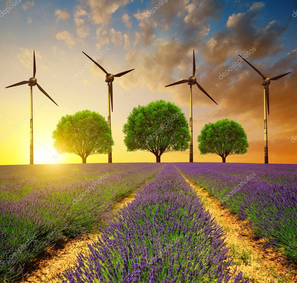 Lavender fields with trees and wind turbines