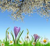 Primavera fiori Bucaneve, crochi e Daisy