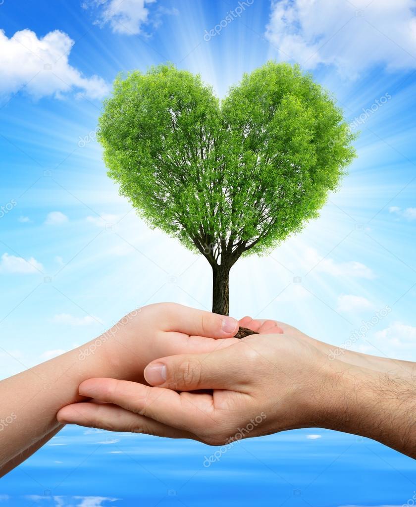 Manos Sosteniendo Un árbol En Forma De Corazón Fotos De Stock