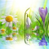 Fotografie Frühlingsblume Crocus, Daisy und Schneeglöckchen