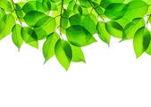 Frühlingsgrüne Blätter