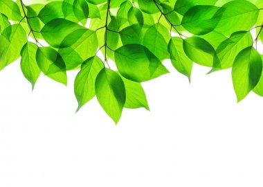 Spring leaves on white background stock vector
