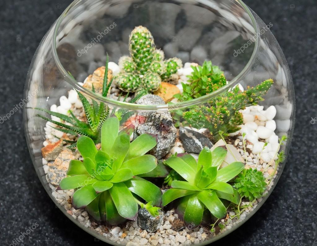 Table top plant decorative garden — Stock Photo © hamikus #106100030