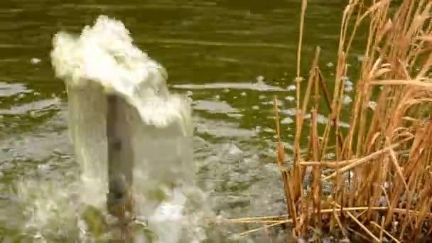 Vodní fontána v zahradním jezírku